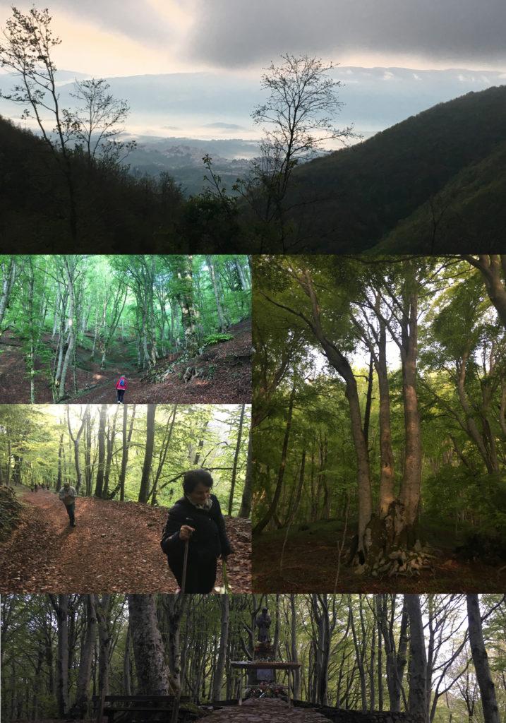 Immagini del cammino nel bosco di faggi secolari per arrivare al primo luogo di preghiera dedicato a San Francesco da Paola.